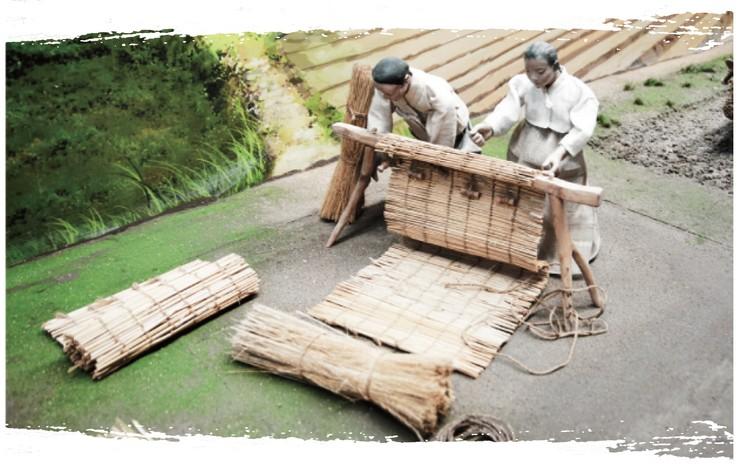 Culture du ginseng - étape 2
