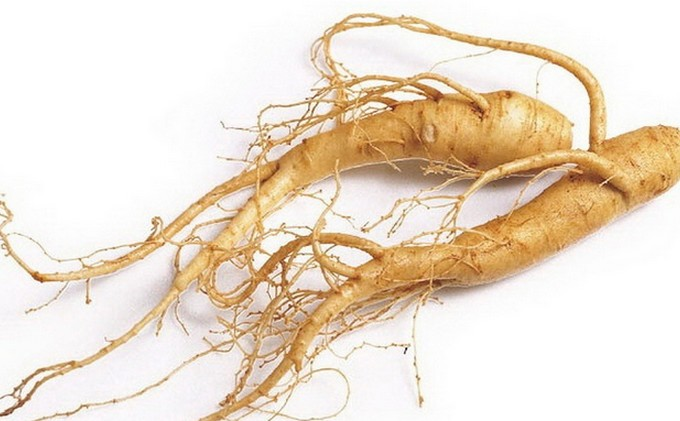 Why choose a 6 year old ginseng?